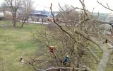 arboristické práce na ostrově Štvanice