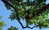 arboristé v korunách stromů