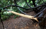 Strom s oloupanou kůrou