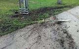 Zničený nově vysazený strom