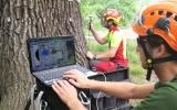 Hodnocení zdravotního stavu stromu