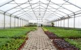 práce ve skleníku