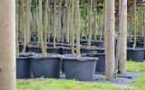 vzrostlé stromy